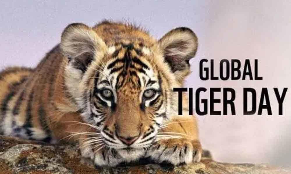 http://www.timebulletin.com/wp-content/uploads/2019/07/International-GLobal-Tiger-Day-2019.jpg