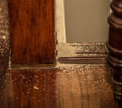 http://www.timebulletin.com/wp-content/uploads/2020/02/4-Signs-of-a-Possible-Termite-Infestation.jpg