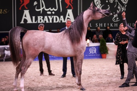 Mohammad Sheikh Suliman's exclusive horse stud 1
