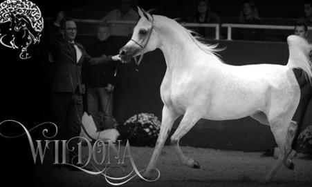 horse stud2
