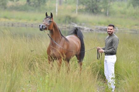 horse stud3