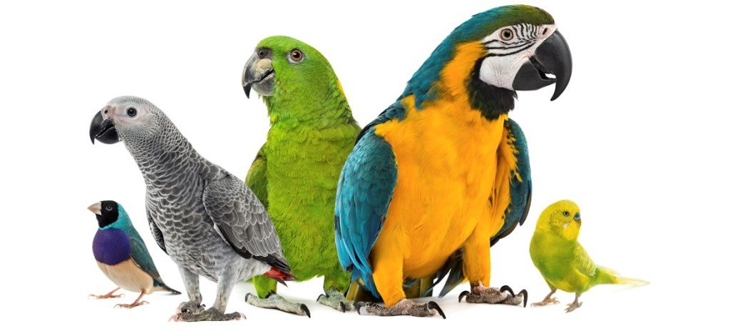 8 Popular Companion Birds as Pets