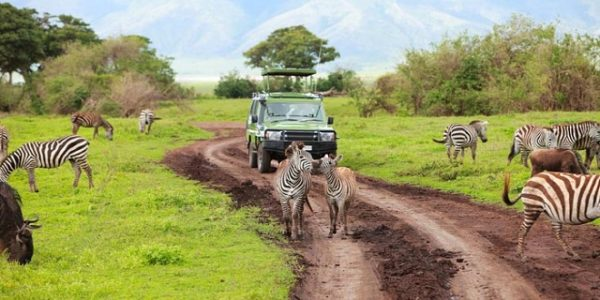 Top 3 virtual safaris to visit on World Environment Day 2020