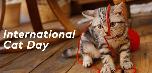 International World Cat Day