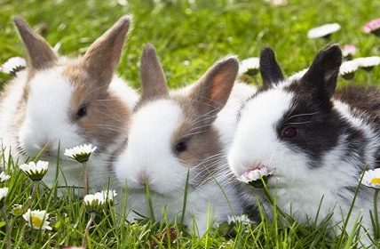 Fun Facts about Rabbits and bunnies