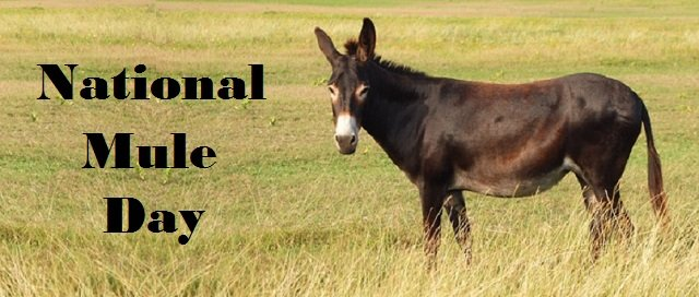 Facts about Mule and Donkey you need to know on Mule Day
