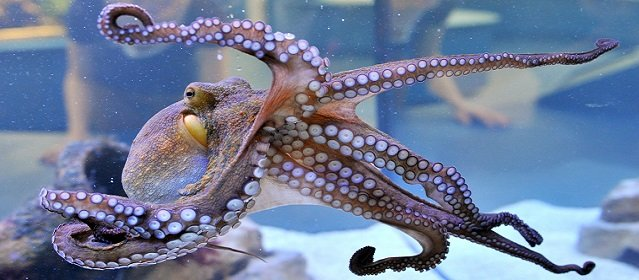 Interesting Facts about Octopuses you need to know on World Octopus Day