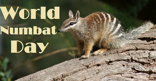 35 Fun Facts about Numbats you need to know on World Numbat Day