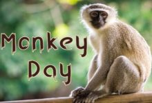 25 Fun Facts about Monkeys You Need to Know on World Monkey Day 1