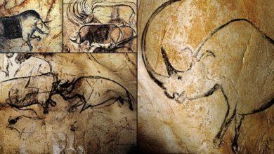 Interesting Facts about Grotte Chauvet Cave UNESCO World Heritage Site