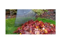 Winter Lawn Care Preparation for Southern Lawns