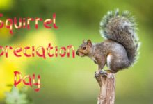 35 Amazing and Fun Facts about Squirrels you need to know on Squirrel Appreciation Day