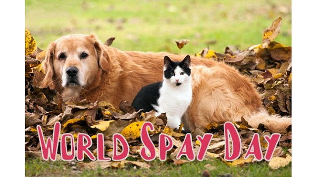 World Spay Day 2021