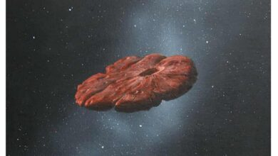 Space peculiarity Oumuamua presumably shard of Pluto like world researchers say