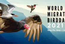 World Migratory Bird Day 2021