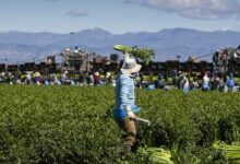 New agricultural visa will offer to ASEAN countries before 2021 end