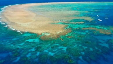 Australia requests UNESCO world heritage specialists visit the Great Barrier Reef before listing it in global in danger sites